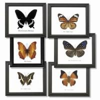 framed_butterflies