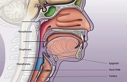 mouthy hunkentenors « parterre box throat cancer diagrams #15